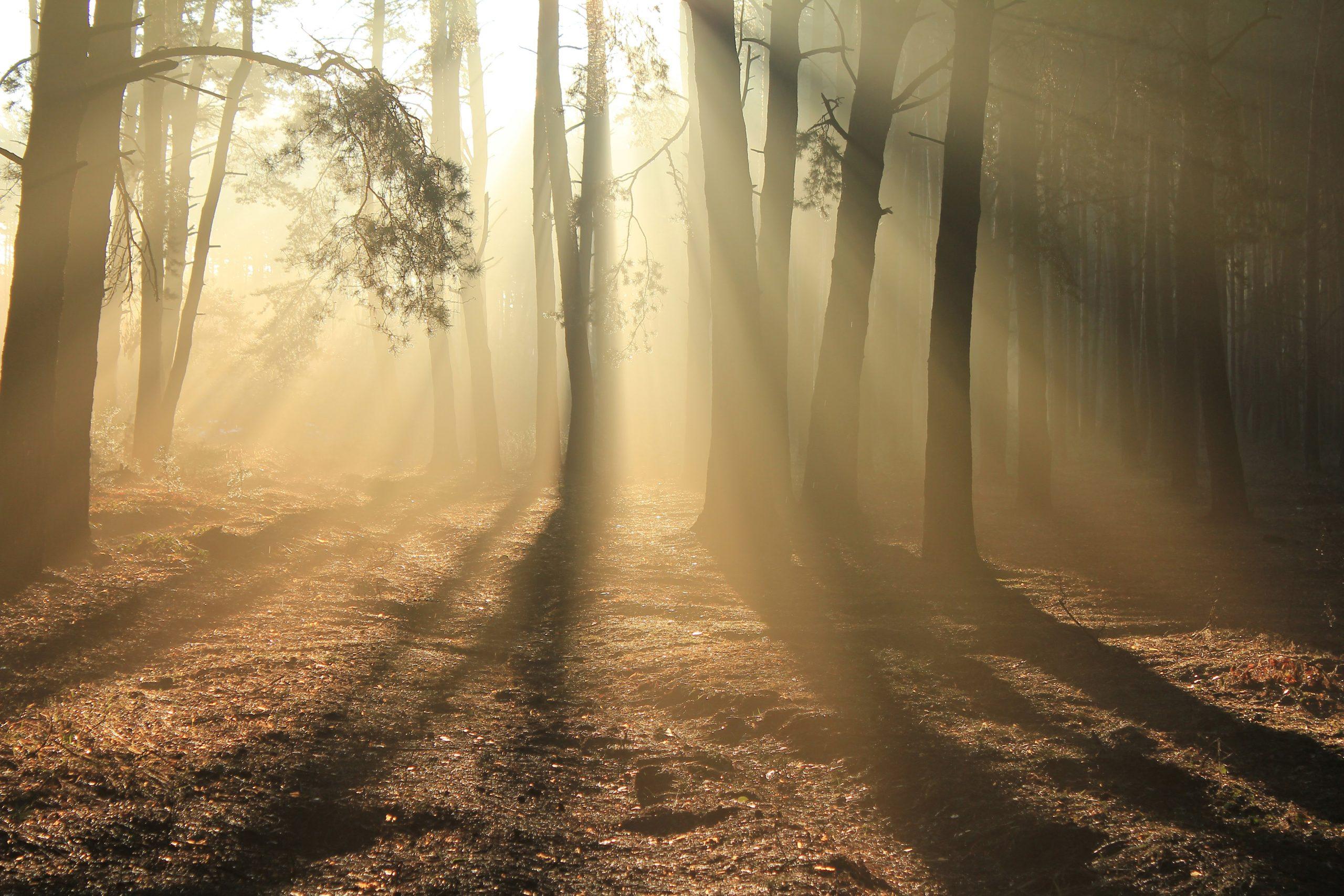 Sobre la renúncia i la transcendència