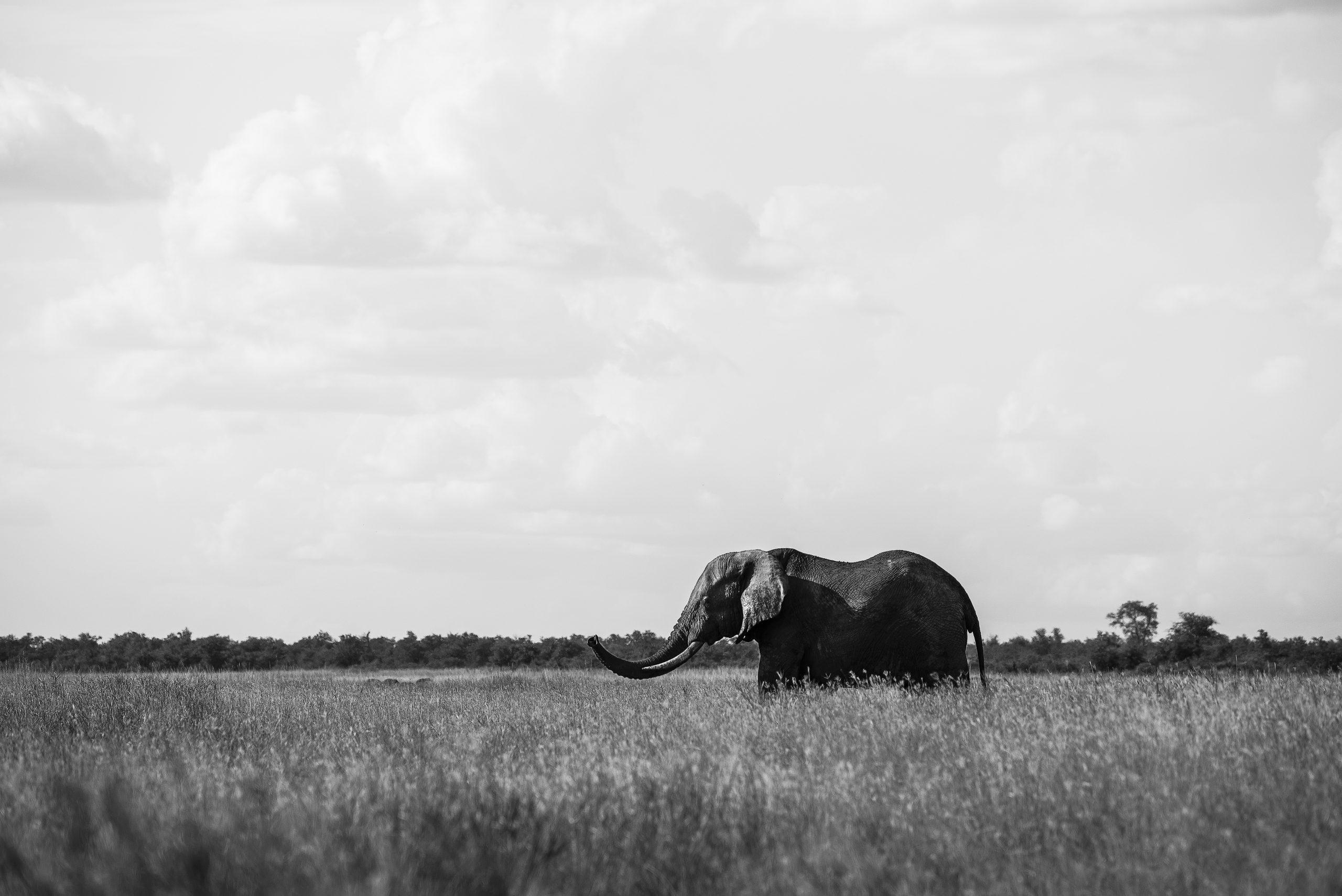 El medi ambient no existeix. Vida