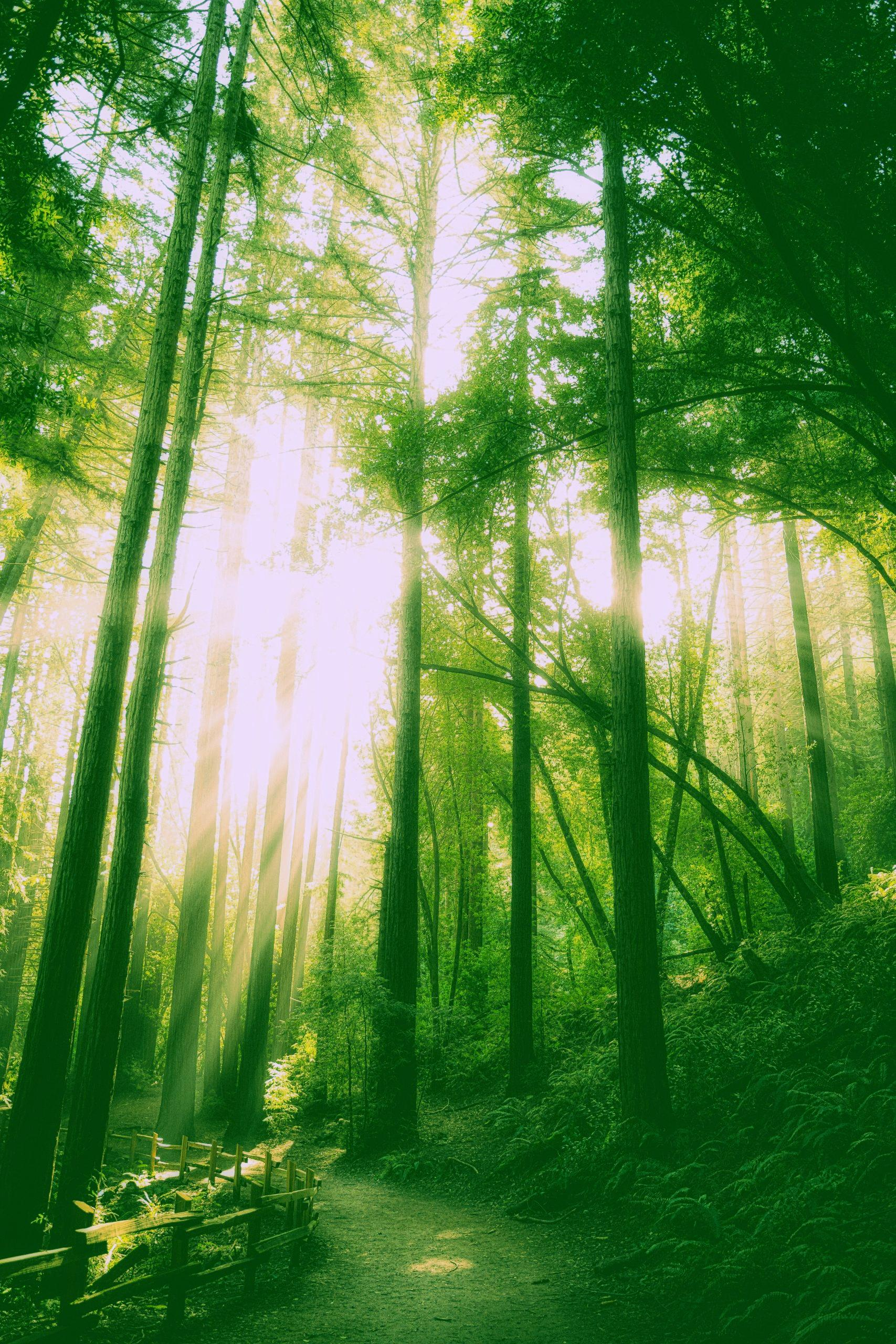 Llum, calma, acció: L'espiritualitat no és una pel·lícula. Contemplació