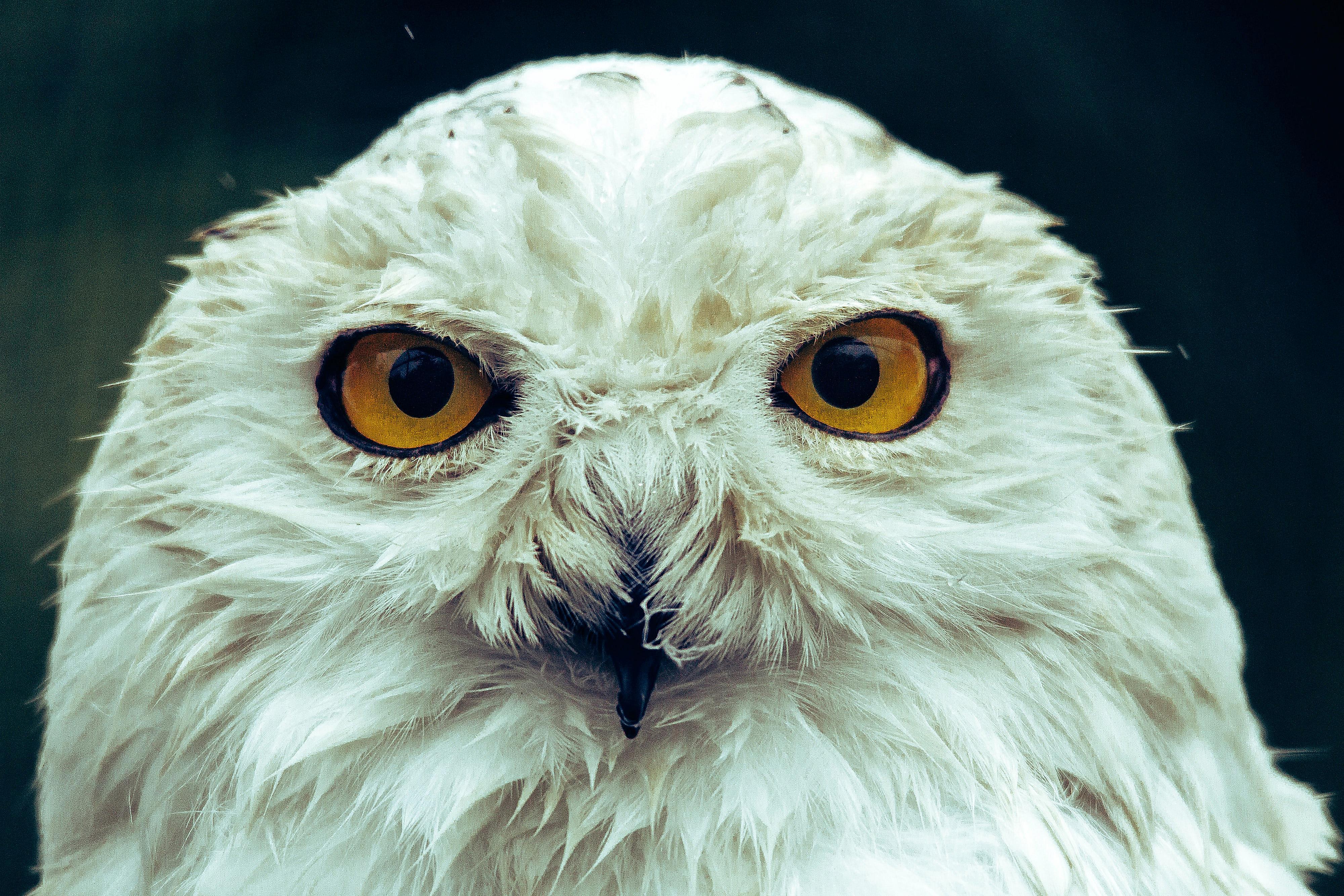 Dos ulls, una mirada. Unicitat