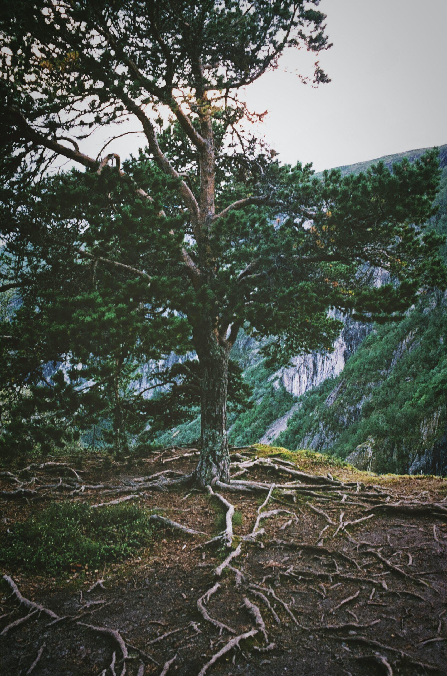 Les arrels no són l'origen. Foto